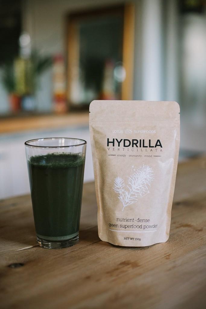 Hydrilla Verticillata Wholesale Order